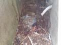tobroek-bunker-wo2-mariapolder-strijensas-10sept2016-12