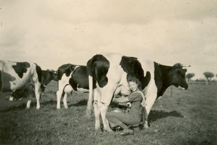 piershil-oorlog-melken-sept1940